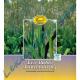 Babka Lancetowata (Wąskolistna) Liść, Liść Babki Lancetowatej 50g Kawon