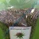 Ostropest Plamisty Ziarno 900g - Naturalna Sylimaryna