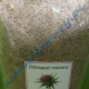 Treatment of Liver - Milk Thistle Ground 900g